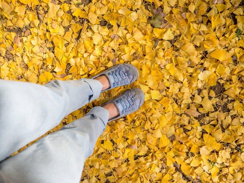 关闭与美丽的黄色秋叶的一张脚图片,秋天风景,五颜六色的叶子在秋天公园在 免版税库存照片