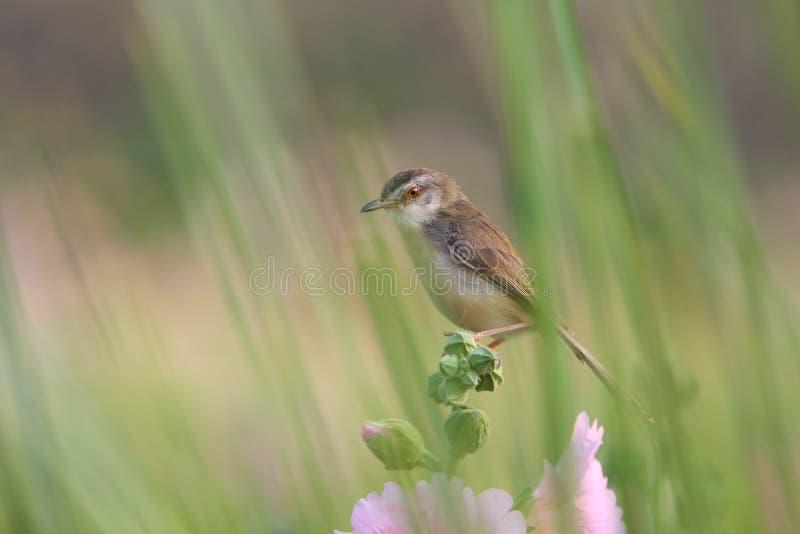 关闭与花的逗人喜爱的鸟本质上 库存图片