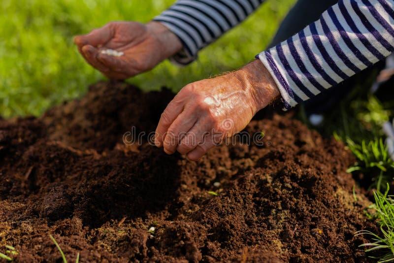 关闭丰富土壤的男性手在被种植的树附近 库存图片