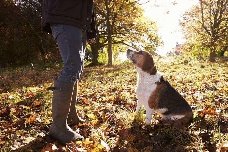 关闭为步行被采取的狗在秋天森林地 库存照片