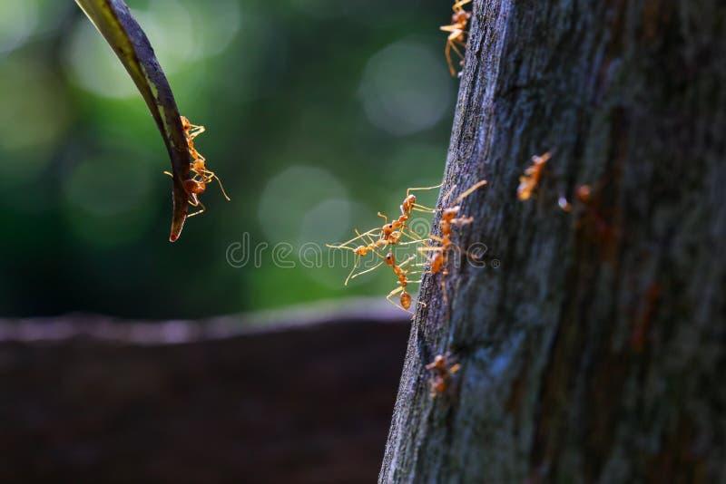 关闭到达的蚂蚁 免版税库存图片