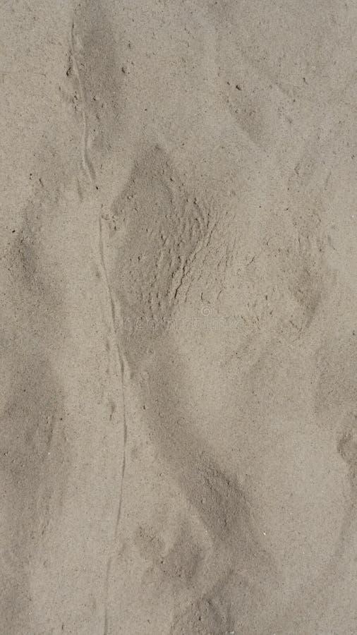 关闭动物脚印和尾巴标记在画垂直弯曲的线的干燥沙子 库存照片