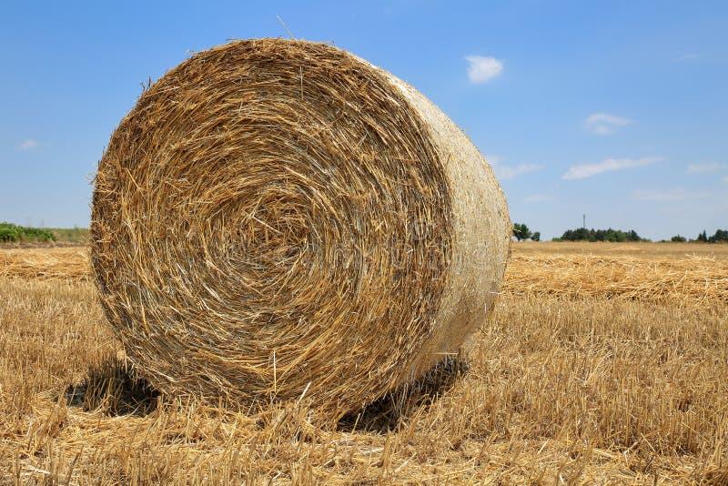 关闭在一块被收割的麦田的圆,金黄干草捆反对与云彩的蓝天 免版税库存照片