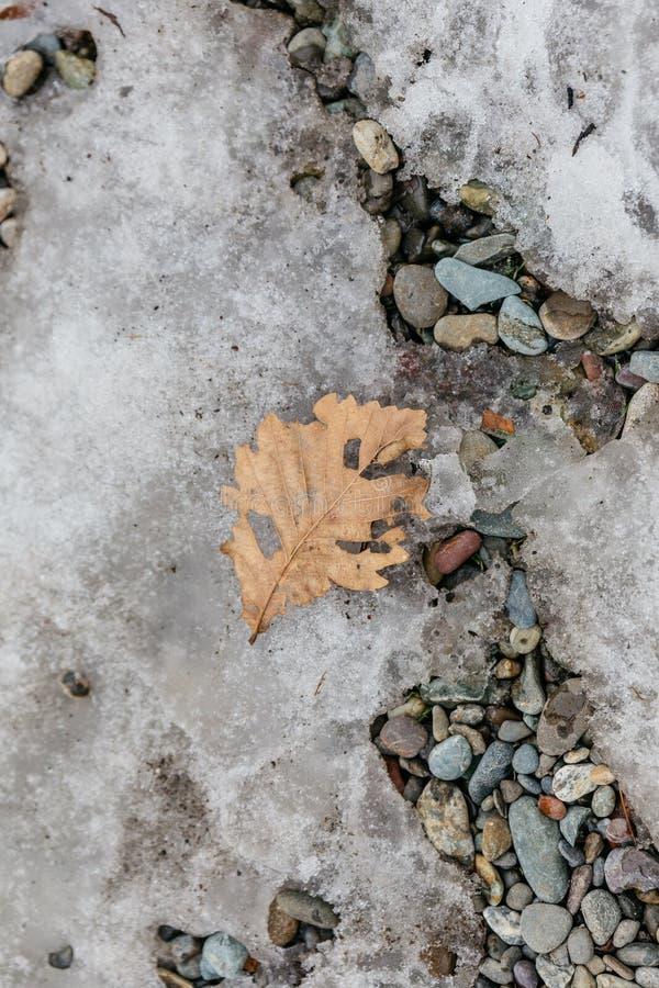 关闭在北海道,日本烘干了在石地面的棕色叶子在Noboribetsu日期JIdaimura历史的村庄 库存图片