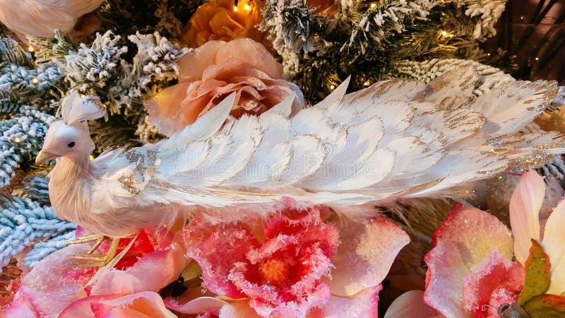 关闭在圣诞树的美丽的桃红色孔雀 免版税图库摄影
