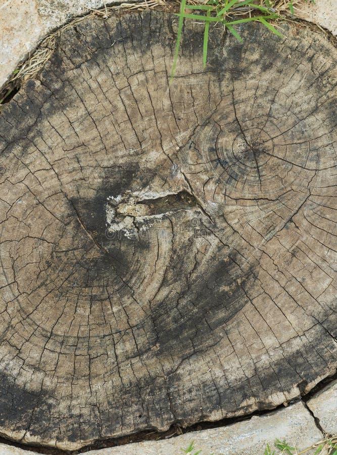 关闭在地面上的树干圆环 免版税图库摄影
