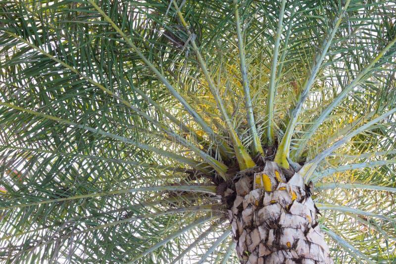 图片 包括有 空白的, 对象, 椰子, 叶子, 叶状体, 节假日 - 71870353图片