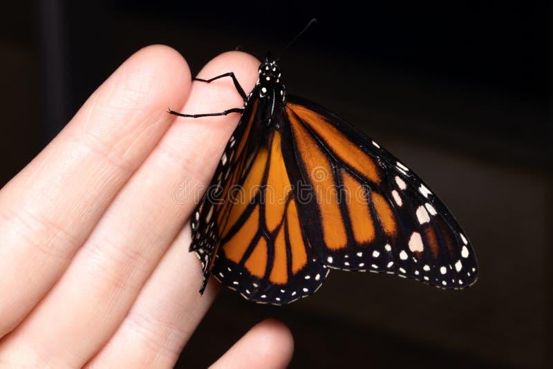 关闭在妇女手上的蝴蝶 本质秀丽 库存图片