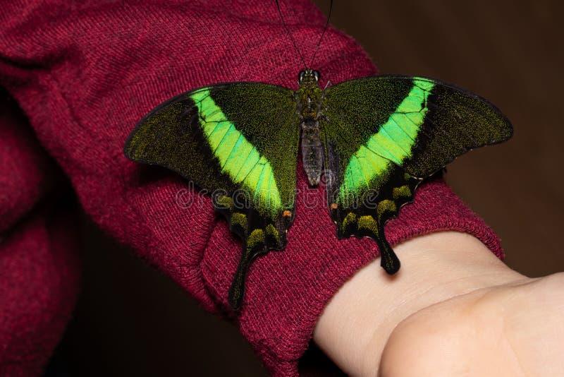 关闭在妇女手上的蝴蝶 本质秀丽 免版税库存照片