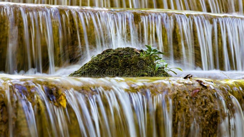 关闭在小河瀑布的一点计划 库存照片