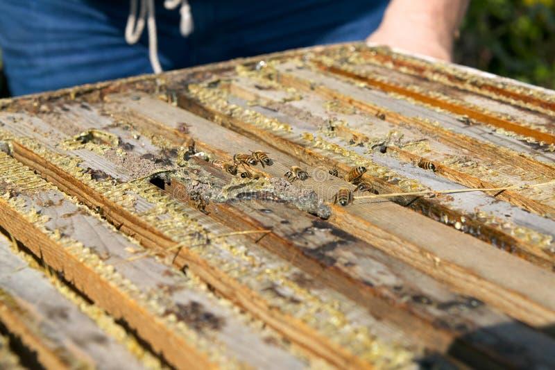关闭在木养蜂业箱子的工蜂 免版税库存图片