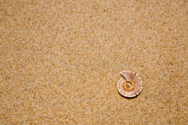 关闭在沙滩的海壳 免版税库存图片