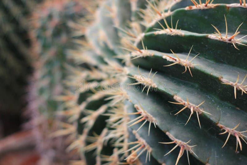 关闭在沙漠环境美化的仙人掌 免版税库存照片