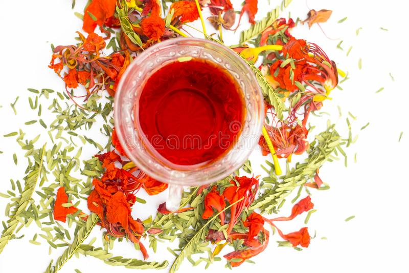关闭在白色隔绝的Gular或槭叶瓶木的橙色或红色色的茶花 库存图片