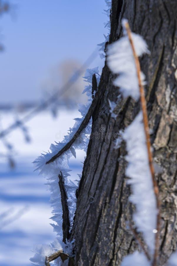 关闭在破裂的树皮的树冰 冷淡的冬天好日子 r ??blured 免版税库存照片