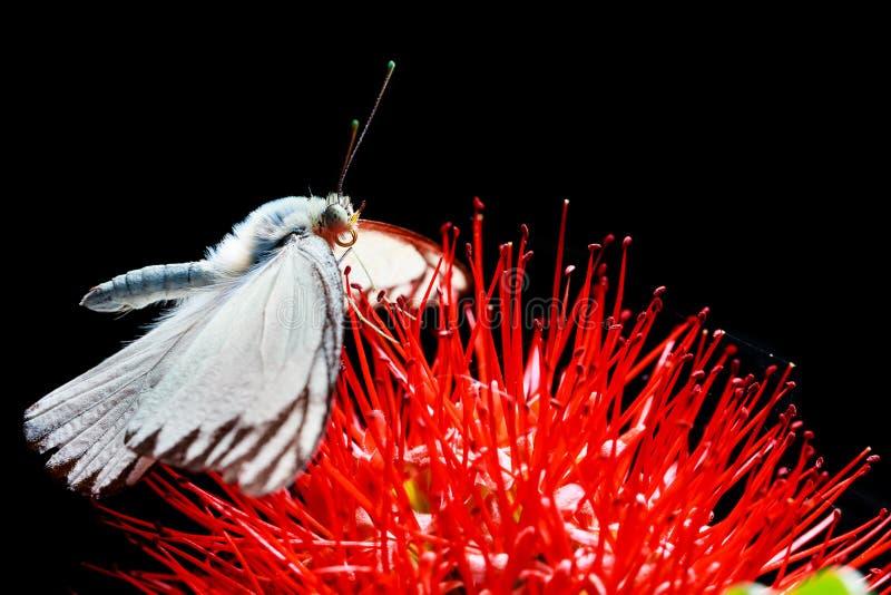 关闭在红色花的蝴蝶 库存图片