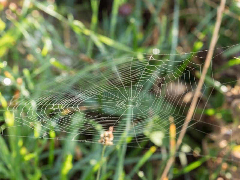 关闭在绿色背景上的一个蜘蛛网 库存图片