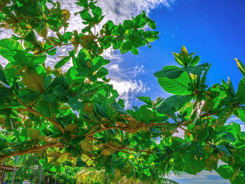 关闭在美丽的蓝天的绿色树 免版税图库摄影