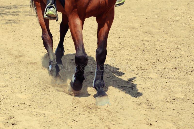 关闭在跑通过多灰尘的fi的马的蹄的看法 免版税图库摄影