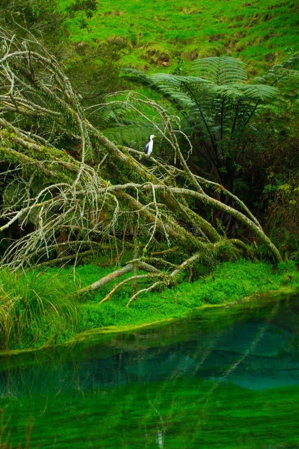 关闭在透明的小河的死的树 免版税库存照片