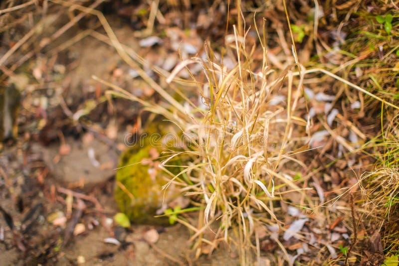 关闭在领域的一些秋天干燥棕色草 选择聚焦,改变的季节的概念 库存照片