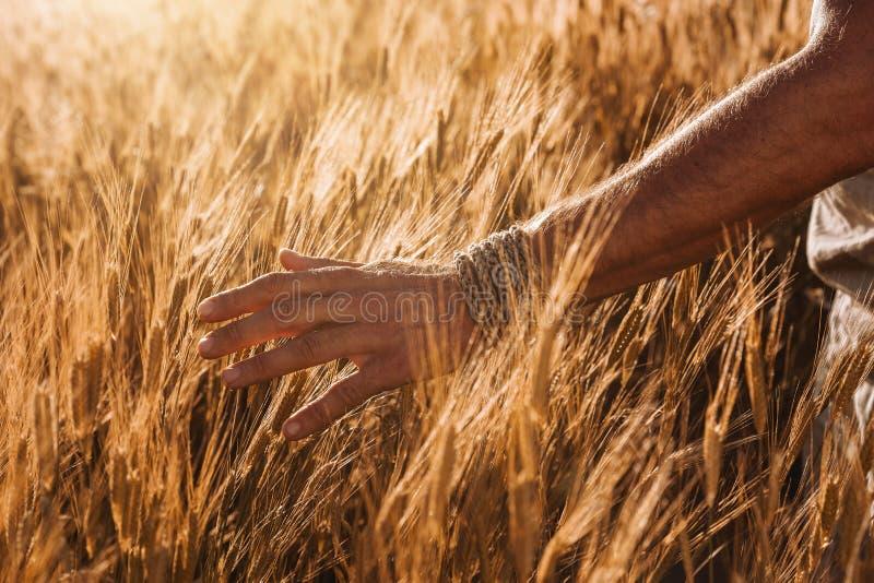 关闭在麦田的男性农夫手 免版税库存照片