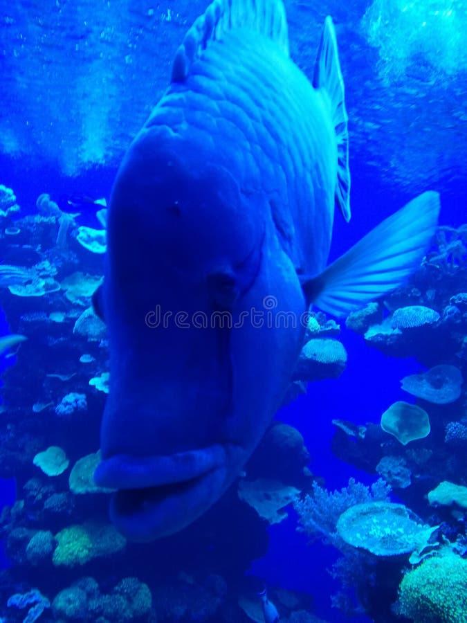 关闭在水族馆的鱼 免版税库存照片
