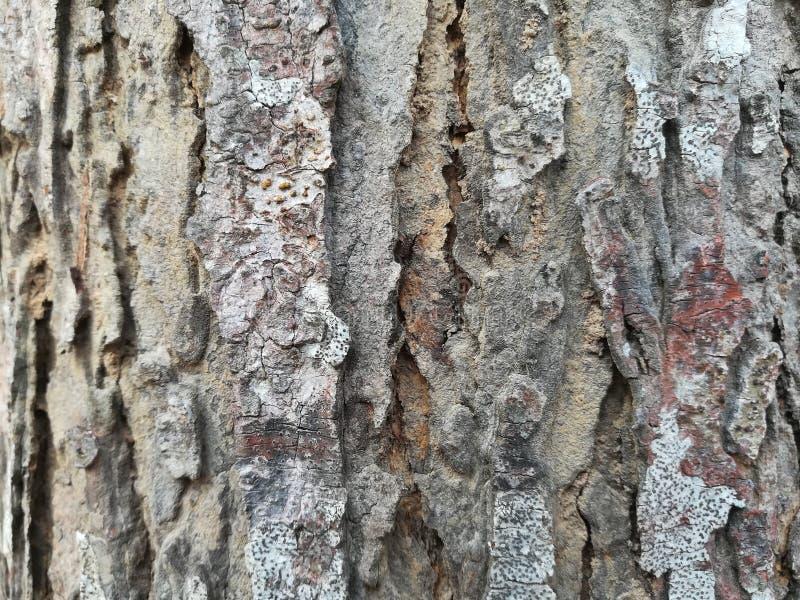 关闭地衣的图片在树皮的 免版税图库摄影