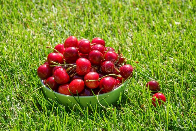 关闭堆与茎和叶子的成熟樱桃 新鲜的红色樱桃的大收藏量 免版税库存照片