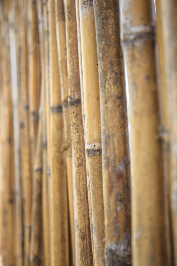 关闭墙壁由竹子制成 库存图片