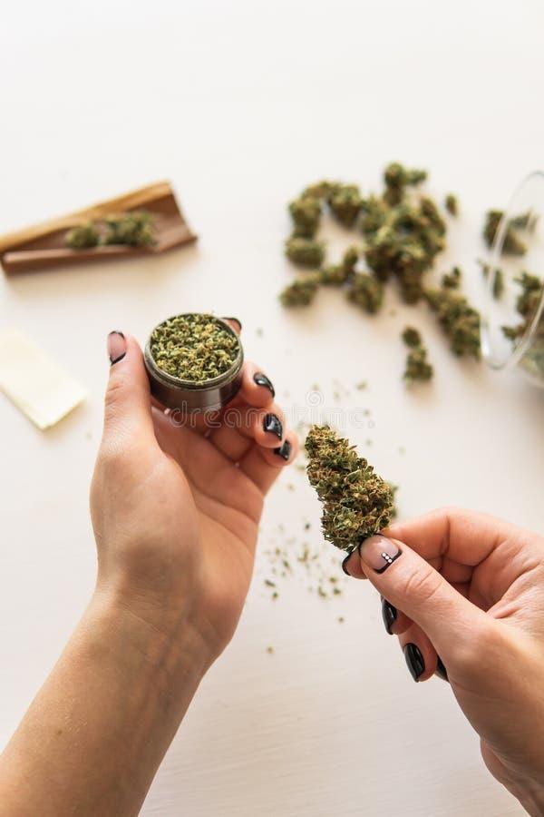 关闭大麻直言与研磨机 大麻用途概念 滚动大麻的妇女直言在白色背景 库存照片
