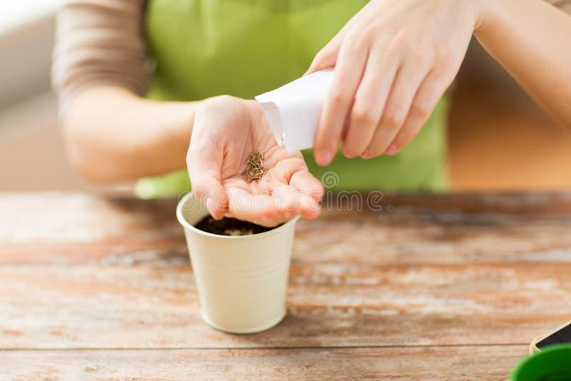 关闭妇女播种种子弄脏在罐 免版税库存照片