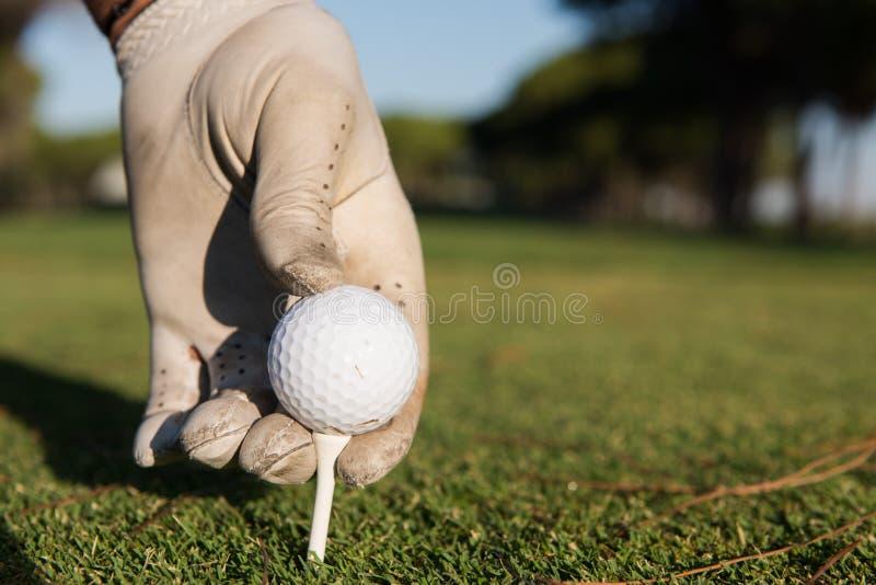 关闭安置球的高尔夫球运动员手在发球区域 免版税库存图片