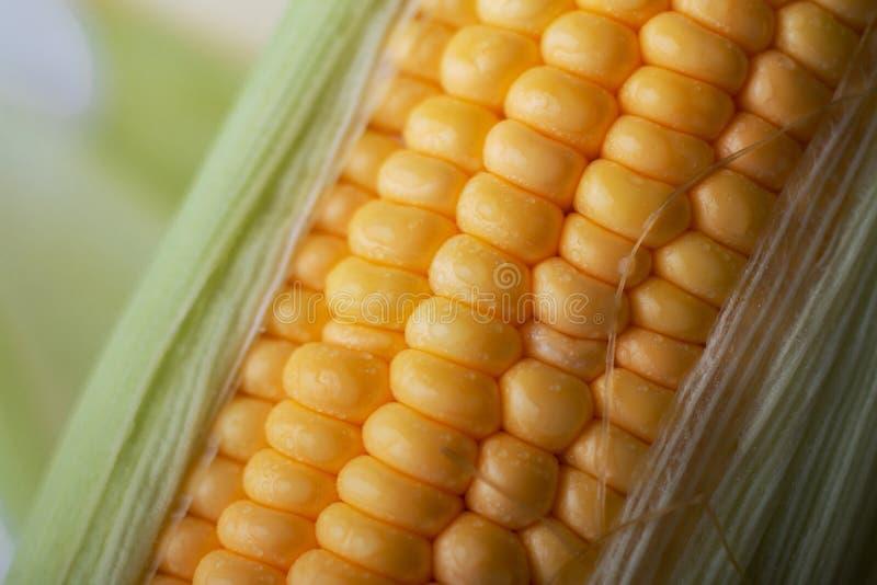 关闭射击与水下落h的新鲜的成熟和被剥皮的甜玉米 免版税库存图片