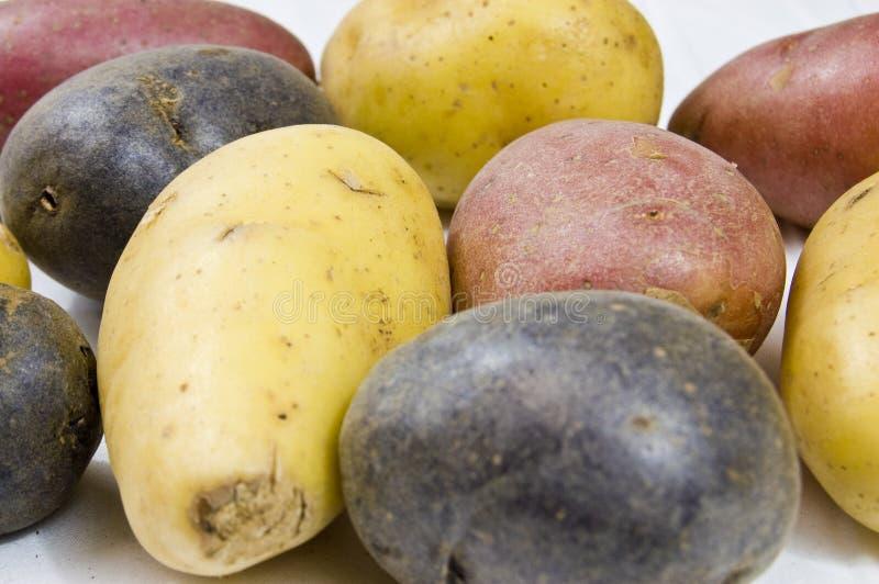 关闭小的土豆种类 库存照片