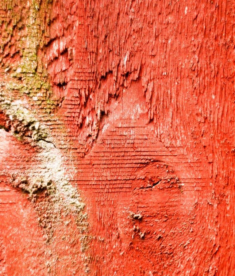 关闭庭院篱芭概略的红色纹理  免版税图库摄影