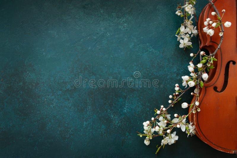 关闭开花的樱桃和小提琴分支在蓝色背景 免版税库存图片