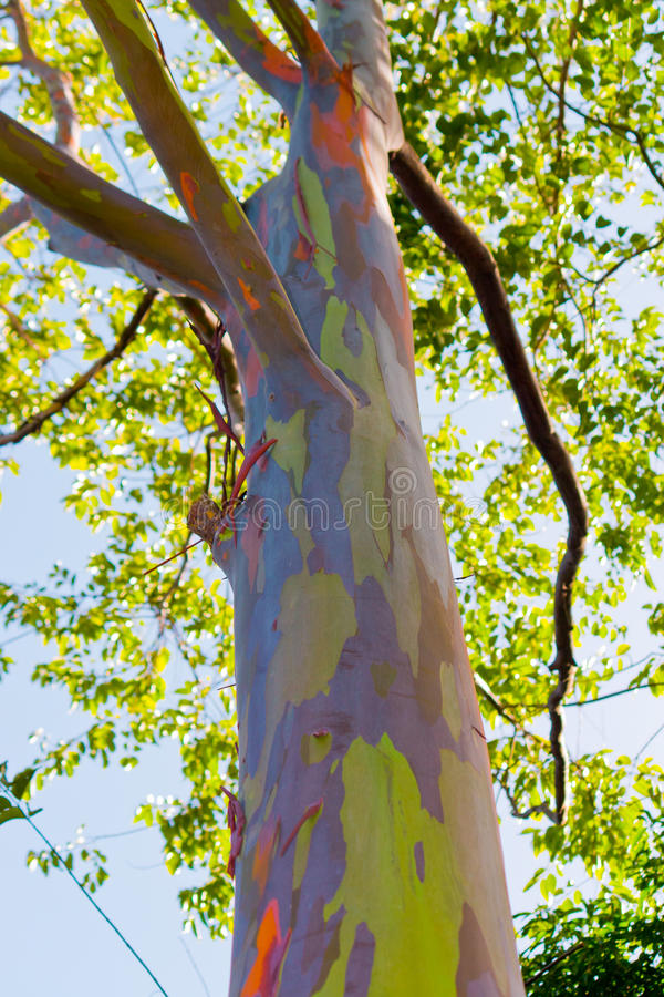 关闭彩虹玉树的五颜六色的抽象模式 库存照片