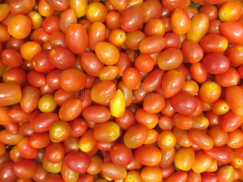 关闭微型蕃茄 免版税库存图片