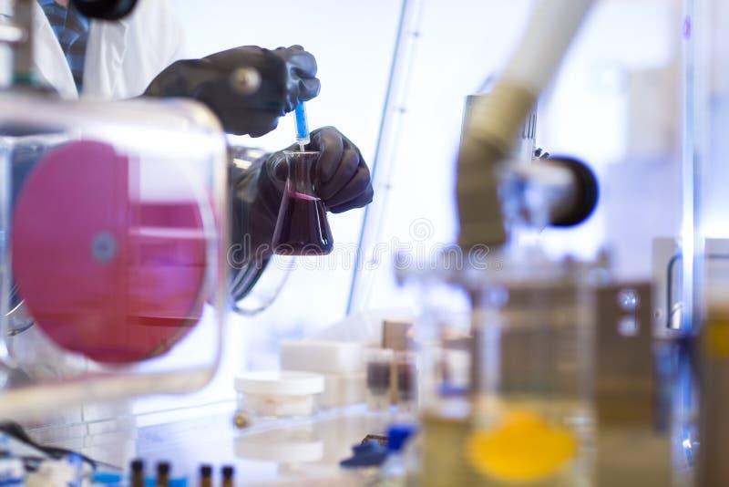 关闭执行研究实验的科学家手在实验室 免版税库存图片