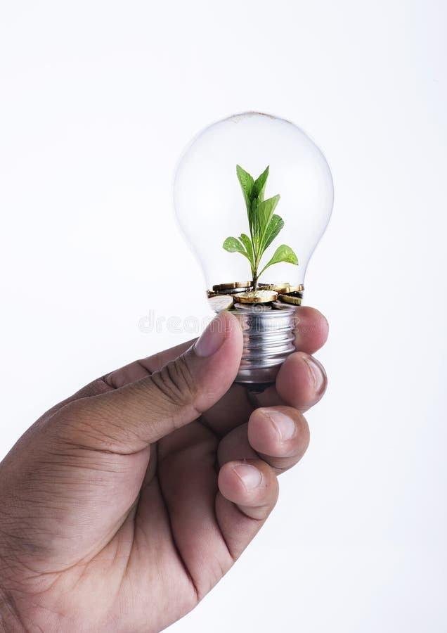 关闭拿着电灯泡和硬币与小植物的手生长在它投资概念外面 免版税库存图片