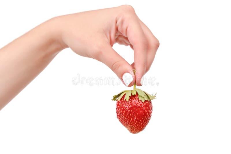 关闭拿着草莓的妇女 图库摄影