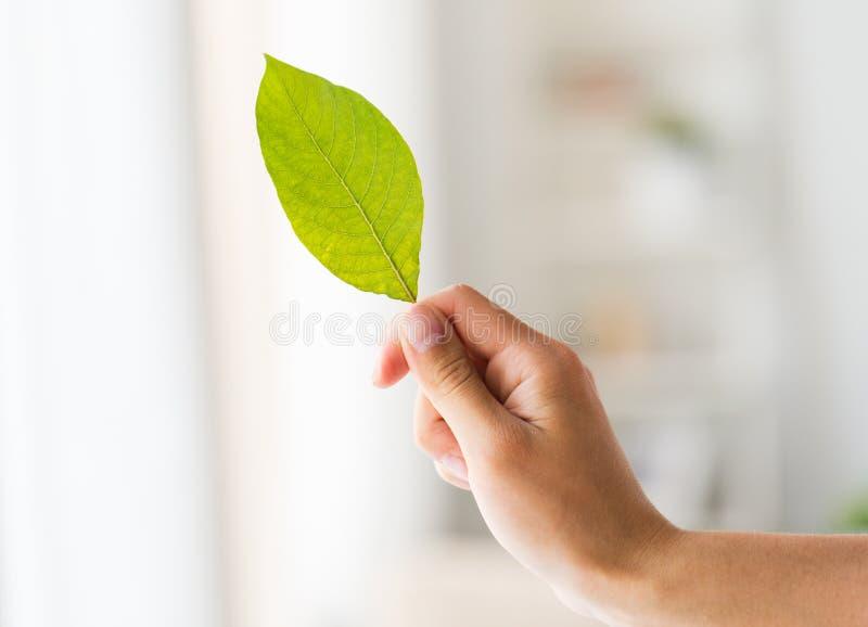 关闭拿着绿色叶子的妇女手 免版税库存照片图片