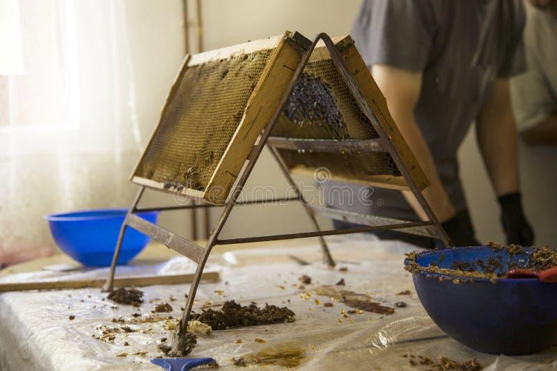 关闭提取蜂蜜的人的手从黄色蜂窝 B 免版税库存照片