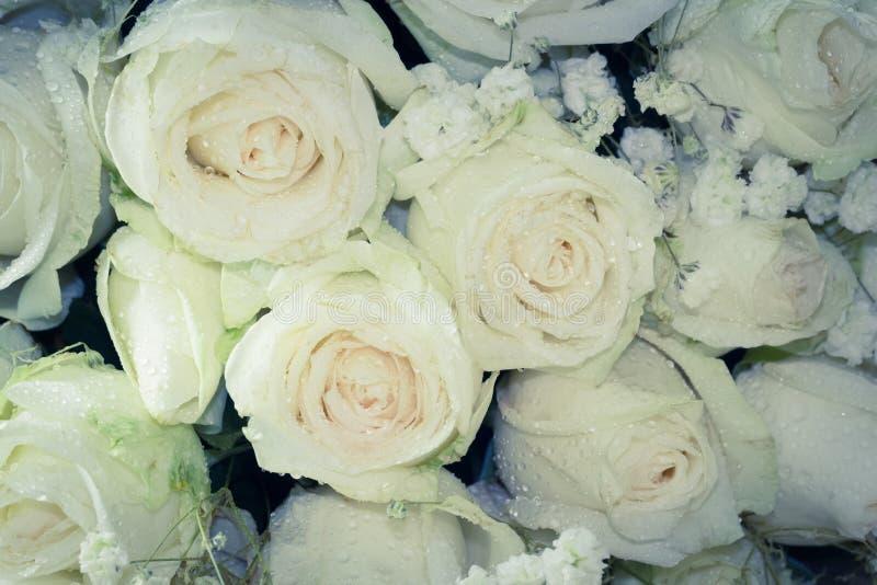 关闭新鲜的玫瑰花束,选择聚焦,葡萄酒tonin 免版税库存照片