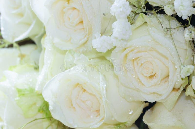 关闭新鲜的玫瑰花束,选择聚焦 免版税库存图片