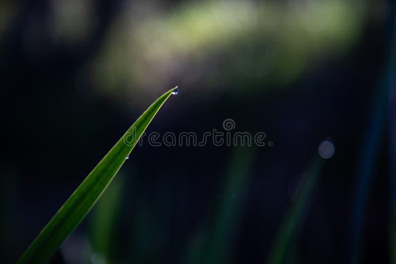 关闭有水和黑暗的背景下落的绿色叶子  图库摄影