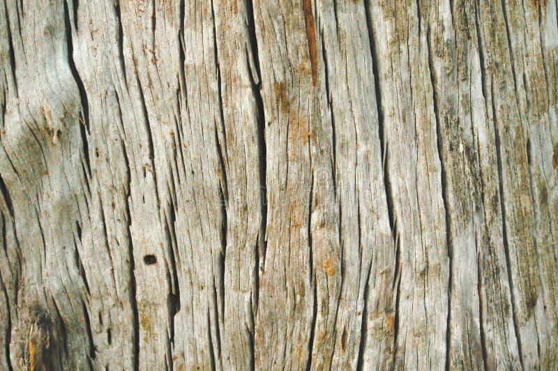 关闭木老自然背景纹理 免版税库存照片
