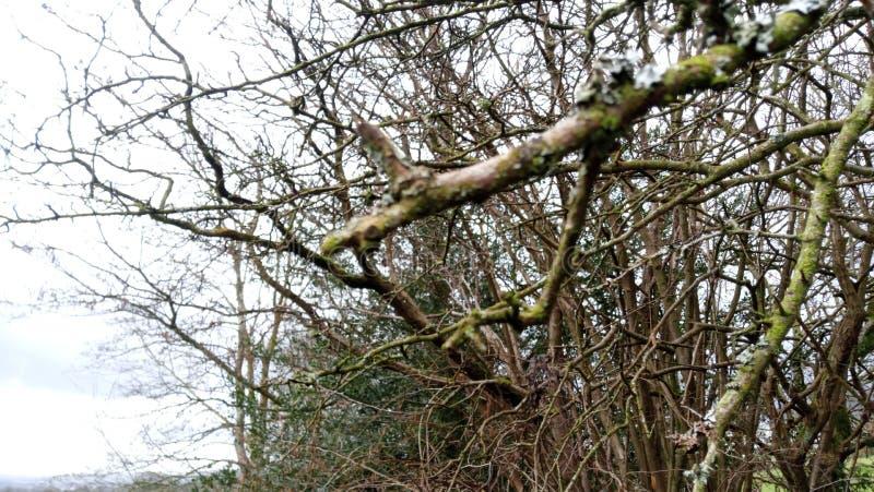 关闭树和灌木有被弄脏的背景 库存图片