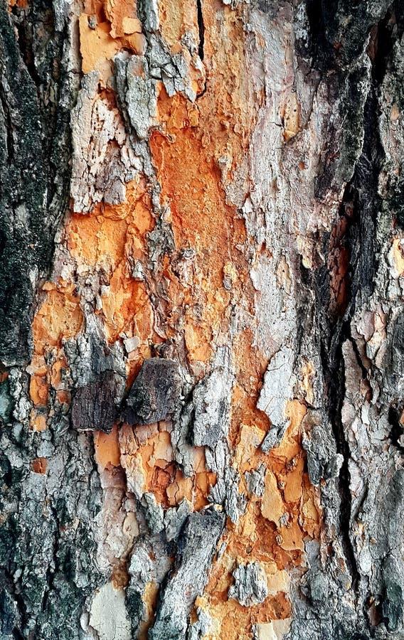 关闭树皮纹理背景 免版税库存照片